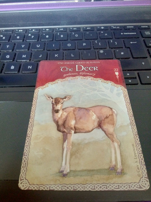 The Deer Cards from The Wisdom of Avalon Oracle Card by Collette Baron-Reid.